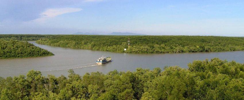 Excursion éco-touristique au cœur de la mangrove de Can Gio