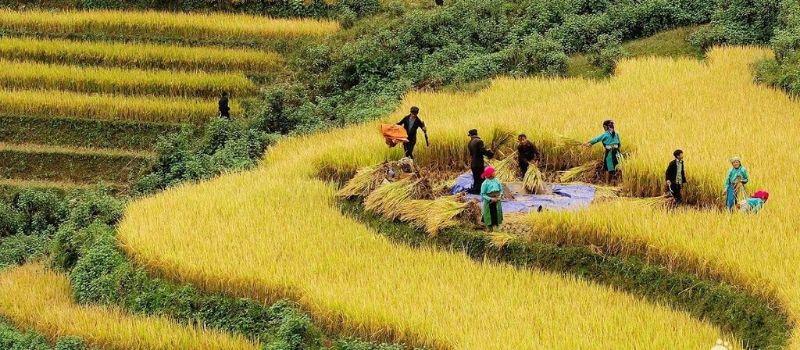 voyage-au-vietnam-en-famille-a-decouverte-ha-giang