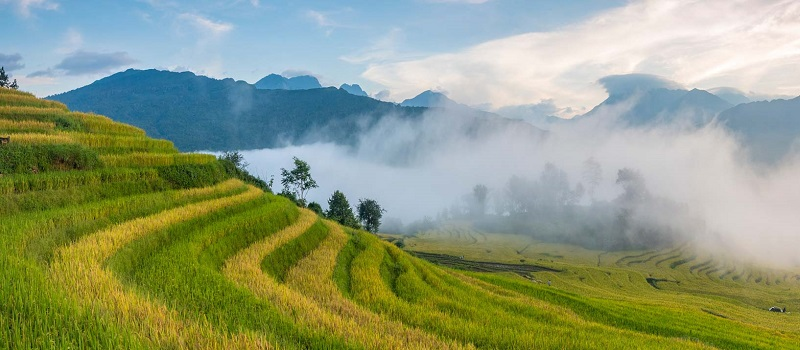 voyage-en-famille-au-vietnam-en-decouverte-rizieres-en-terrace-pu-luong-mai-chau