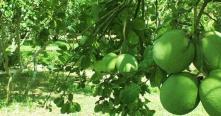Eco-village de Thuy Bieu et cours de cuisine 1 jour