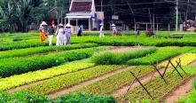 Visite Village Tra Que et la pêche à Cam Thanh Hoi An 1 jour